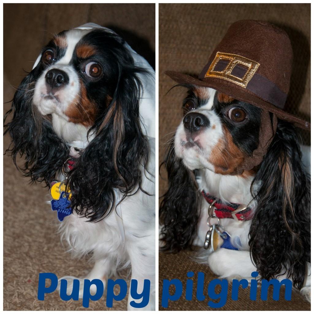 Puppy pilgrim