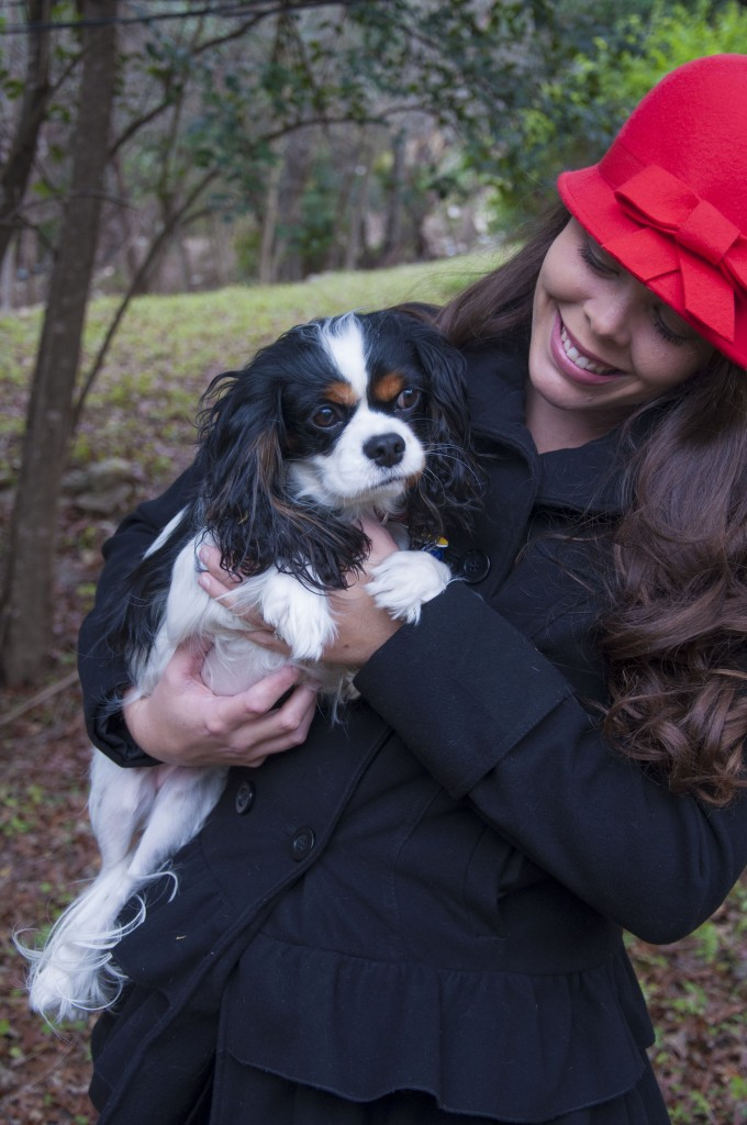Cavalier King Charles and a red bow hat