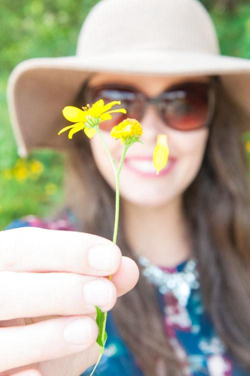 Fall daisies