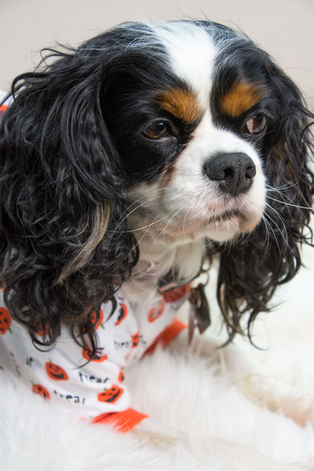 Dog Pumpkin PJs