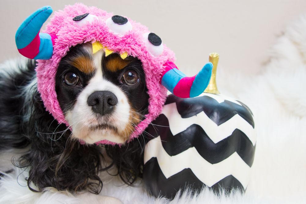 Dog costume- monster